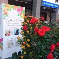 九州バラ祭