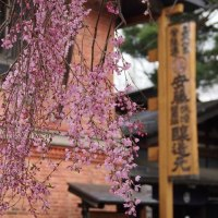 桜の時期のお献立例をアップしました!!そして昨年の桜の様子もご覧ください。
