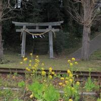小湊鐵道2017.3 #13  ~ 花だより #12 ~