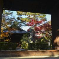 紅燃ゆる京都2016 霊雲院