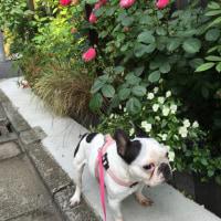 おはよう プリン‼︎ ビックバーンで頭空っぽ♡♡♡Chardon ♡ シャンパン