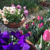 春のポテトサラダと庭