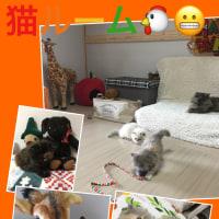 わい わい♪new猫ルーム工事〜ミニ動画♪(=^▽^)σ猫ハッピー!