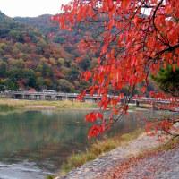桂川 京都