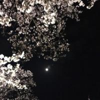 花子さんのお花見