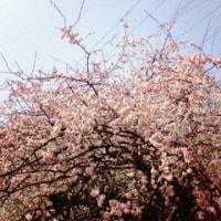 今日の駒沢公園は、