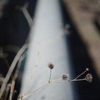 枯れ草と新芽と