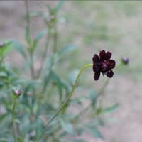 夏の花が庭を彩っている