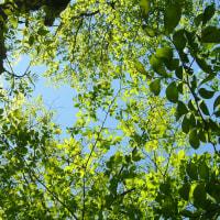 青空に透ける緑 森林浴