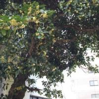 初秋の香り~おでん@おでん屋小坊主in熊本市