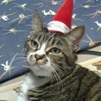 メリークリスマスな西山口シャトル