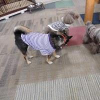 U^ェ^U犬のしつけ 犬の幼稚園 Buddy Dogのようす 2014/02/22U^ェ^U