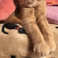 たまらなく眠い。