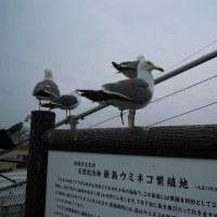 頑張ってた鳥