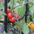 我が家も収穫の季節。