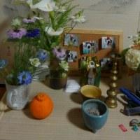 ニゲラの花 その2