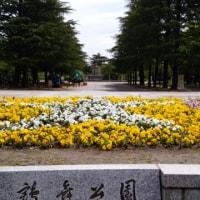 花まつり開催中の公園へ