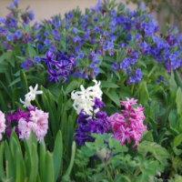 春の花壇♡