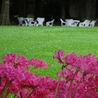 服部緑地緑化植物園のリコリス
