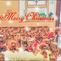 Merry Christmas ☆彡