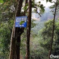 雲南古茶樹ツアー その6 南糯山へ