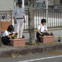 学校前に花を植えました