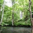 奥入瀬渓流の大樹