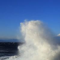 富士山 二度目なる伊豆南下...  白いうさぎ飛び舞い