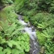 旧軽井沢バスツアー その3 「白糸の滝」