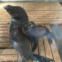 京都水族館に行って来た