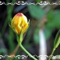 高御位山の花