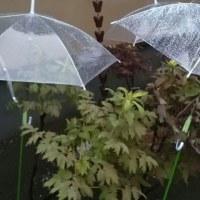 晴鮎雨鰻、