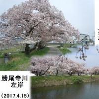 春のうららの勝尾寺川