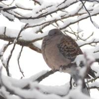 この冬一番の降雪でマルバトに