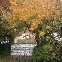 My autumn leaves of red and gold (その1)
