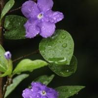 今日は一日雨模様!