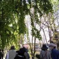 緑の王国ガーデンツァー