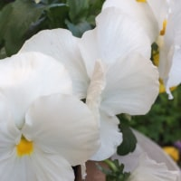 我が家のお花たち