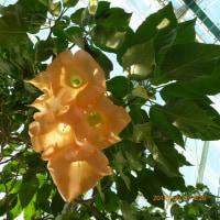 熱帯植物園。
