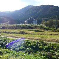 2016/10/16(日) 瀬戸蔵山の紅葉はまだ