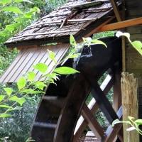 秋の京都散策-その2!・・・京都府立植物園