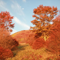 霧降高原キスゲ平園地の紅葉