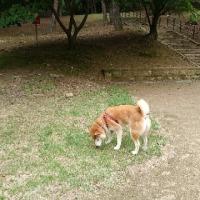 昼散歩は赤松公園