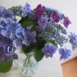紫陽花いろいろ取り揃えております