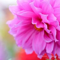 花をふんわり撮ろう♪ ②