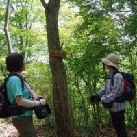 中央本線の駅から登る「矢平山」に行ってきました。