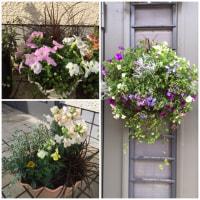 春~お花の植え込み