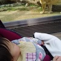 みんなで動物園