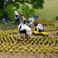 万博の花壇を支える人たち