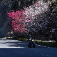 天気が良いと「春、沿道の花を見ながらのツーリング」いいな~